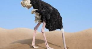 Burung unta. (aljazeera)