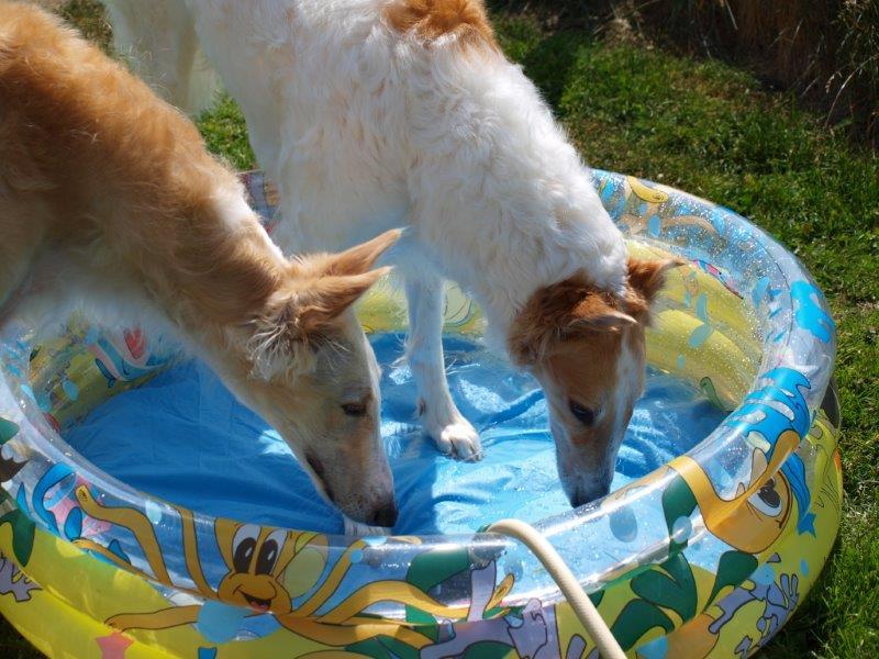 Våra hundar
