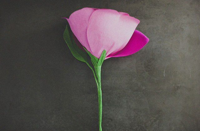rosagigante10