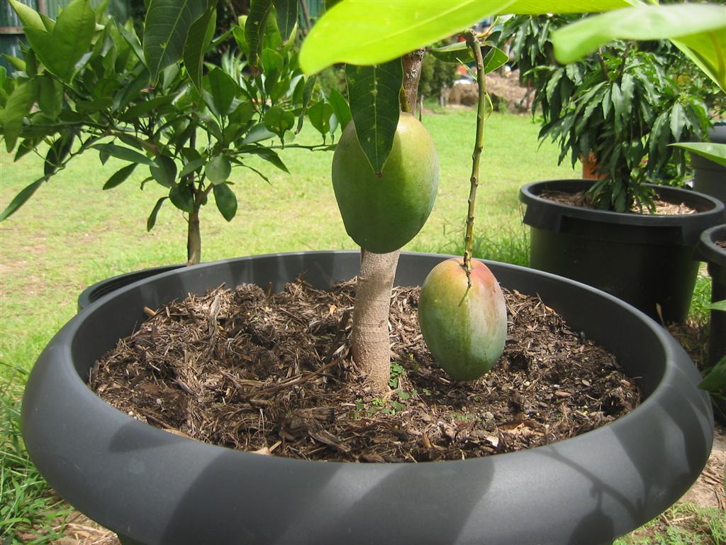 Pineapple Yard Art