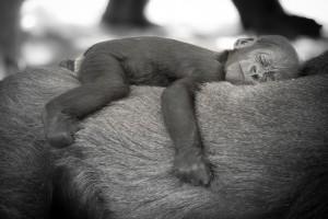 """""""Nap Time"""" v. Cat Burton (CCBYNCND) by Flickr"""