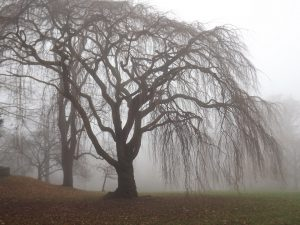 """Foggy Tree"" v. Stanley Zimny (CCBYNC) by flickr"