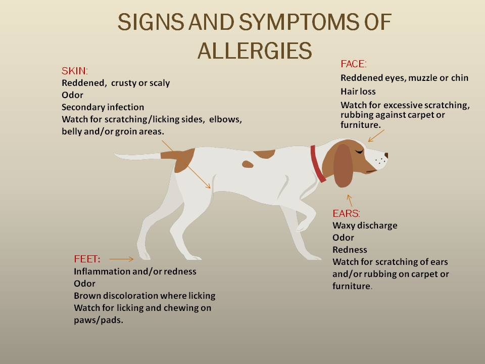 Signs Of Food Allergy In Dogs In many cases, your dog may
