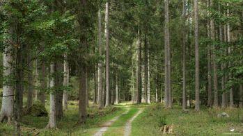 Il Grande bosco by Alberto Bregani
