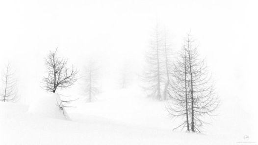 White Morning by Alberto Bregani