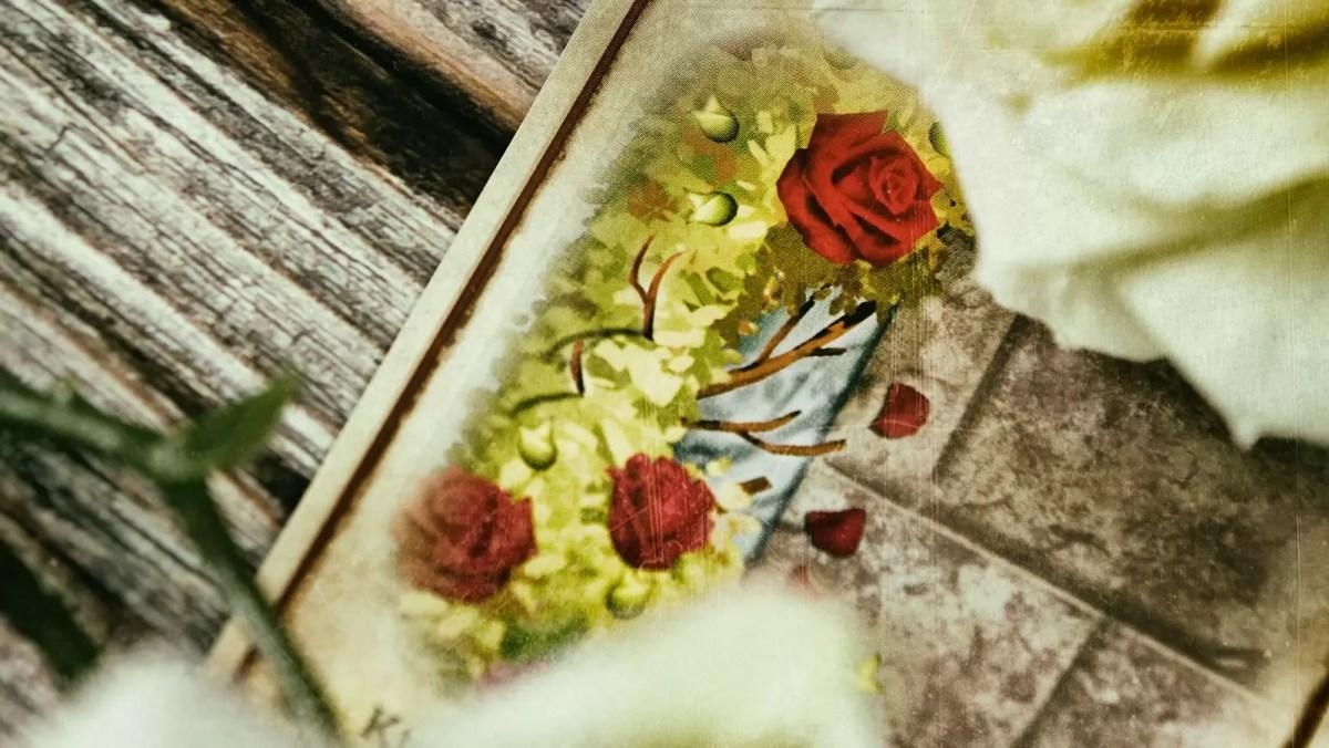 krwawe róże