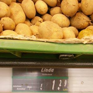 Kartoffel Linda