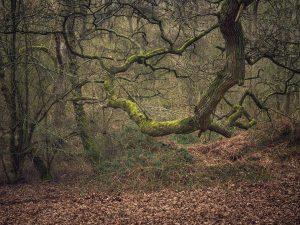 oak tree Shotover Country park Landscape Photography
