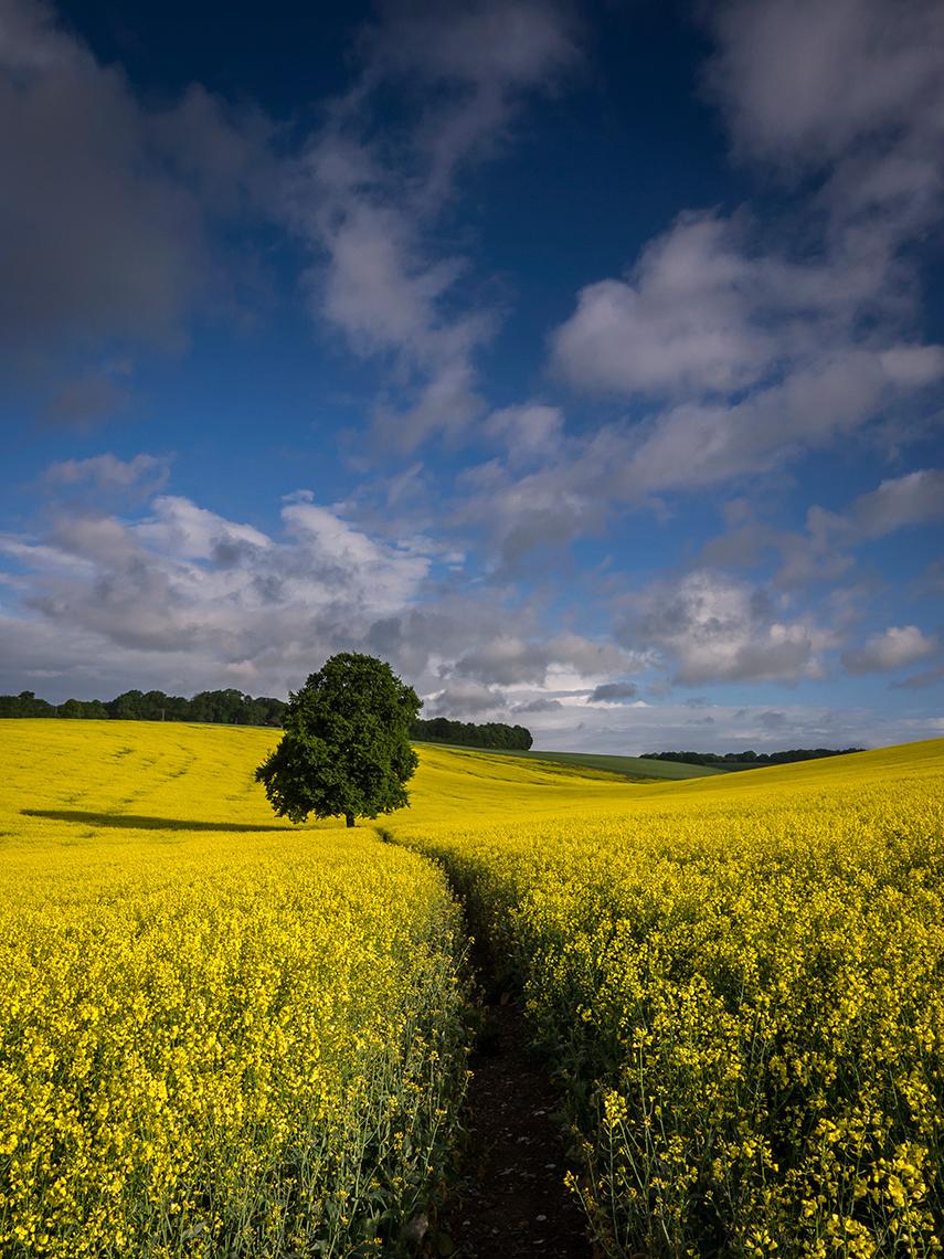 tree Nettleden, Hertfordshire. Landscape Photography