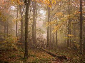 Wendover Woods Chiltern Woodland Autumn Landscape Photography