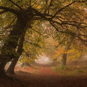 Ashridge Chiltern Woodland Autumn Landscape Photography