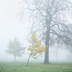 Landscape Photography of misty trees