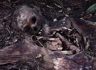 Mostly skeletonized remains