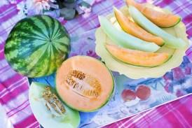 Odrůdy melounů