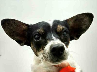 Tinkerbell. Photo: Courtesy of the San Clemente-Dana Point Animal Shelter