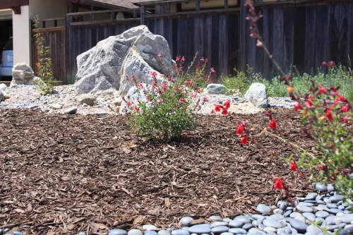 The Jorgensens created a rock garden accented with drought-tolerant and native plants. Photo: Andrea Swayne