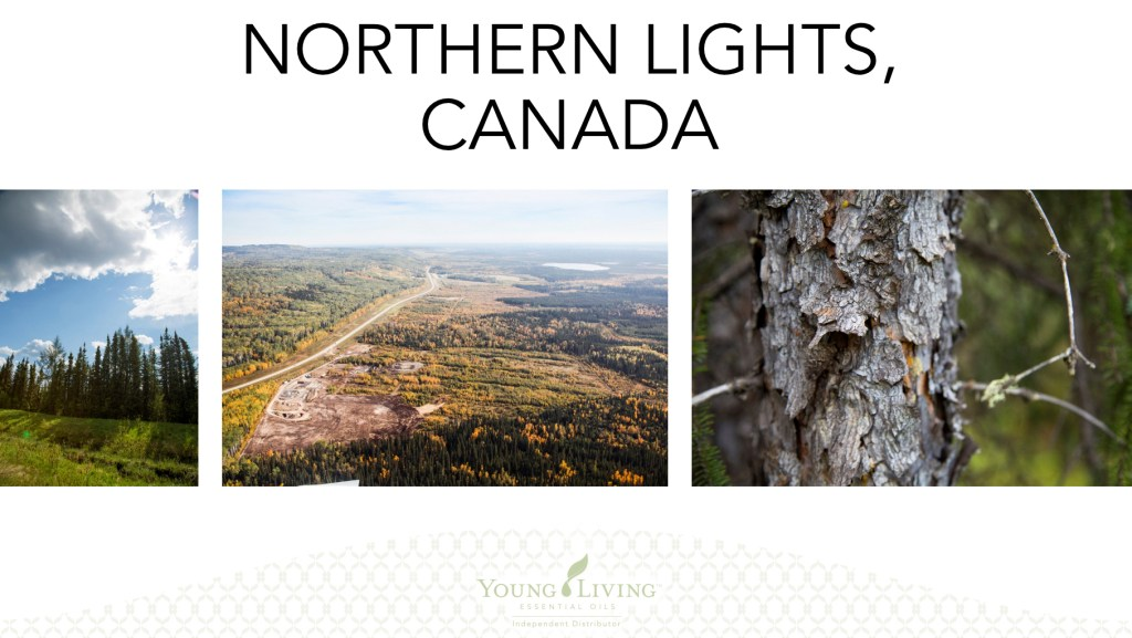Young Living, Young Living Essential Oils, Farms, Seed to Seal, Canada