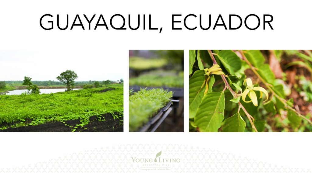 Young Living, Young Living Essential Oils, Farms, Seed to Seal, Ecuador