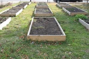 Gardening Bedsnext to the SoHa Art Gallery