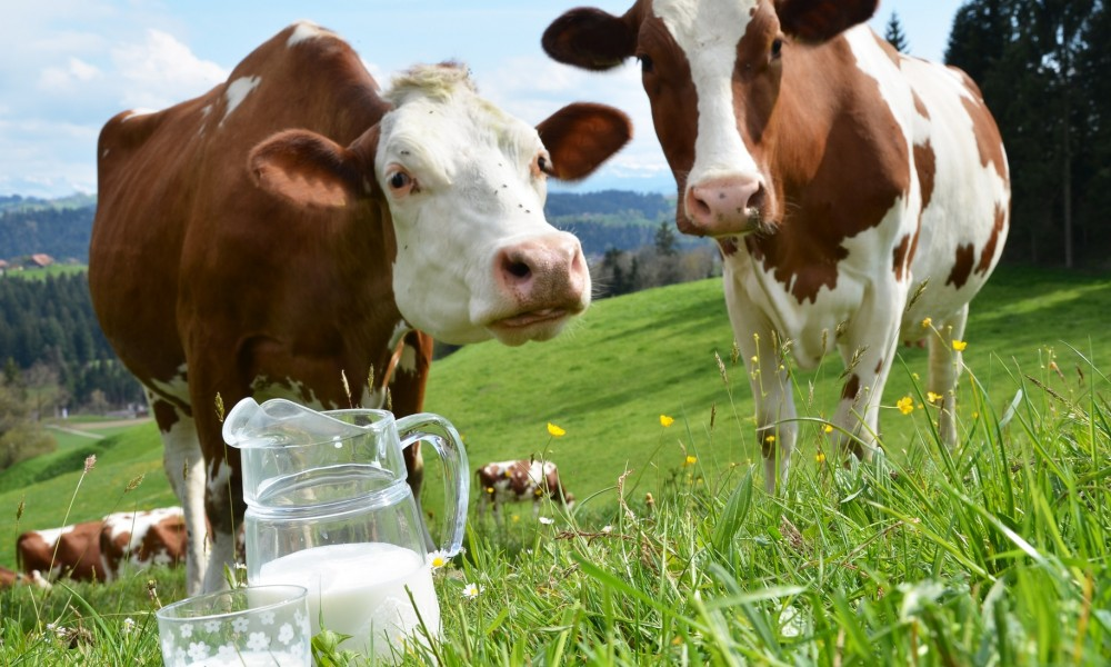 Farm Fresh Kurma Fresh Milk