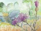 knapweed painting
