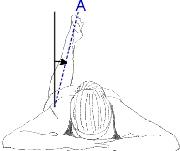 measuring1