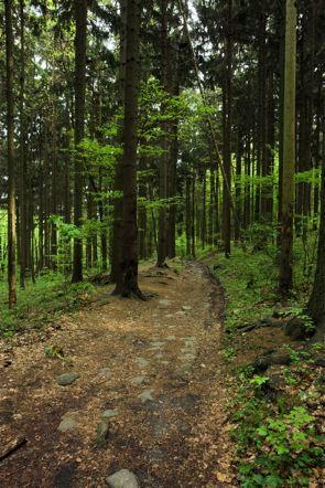 Dirt path through the woods on http://DancingUpsideDown.com