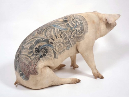 Delvoye started creating tattoos on pig skins from slaughterhouses and then