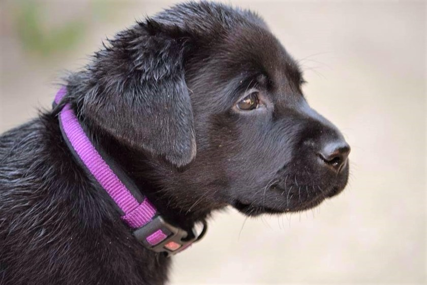 Expert tips from pet parents on what you need and what you need to know before adopting a new puppy, including timing and essential supplies.