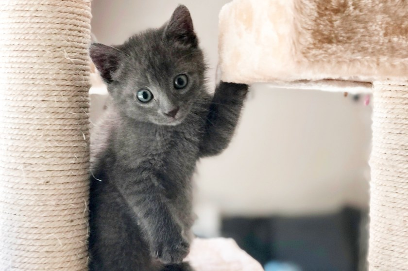 The best expensive designer cat trees, cat towers, scratching posts and other cat furniture for every kind of luxury home décor.