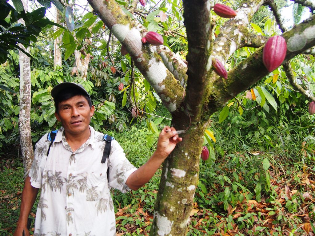 A walk through the cacao farm with Victor Cho.