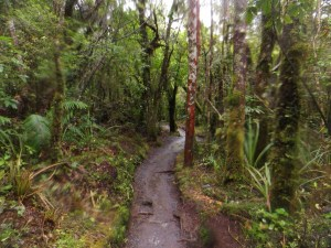 Rainforest near the end of the track