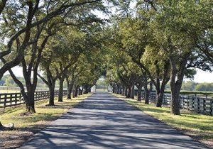 Private-roads-asphalt-paving