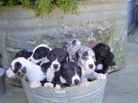 pail puppies 08.jpg