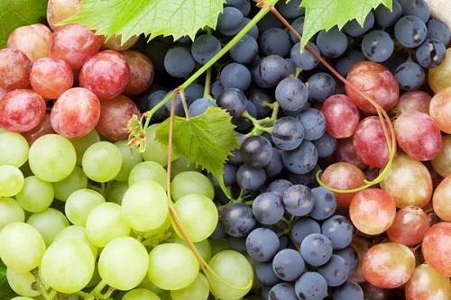 vinograd - Камеры хранения винограда