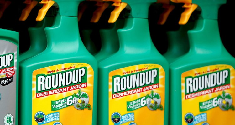 File photo of Monsanto's Roundup weedkiller atomizers seen on sale at a garden shop at Bonneuil-Sur-Marne near Paris, France, June 16, 2015.   REUTERS/Charles Platiau/Files