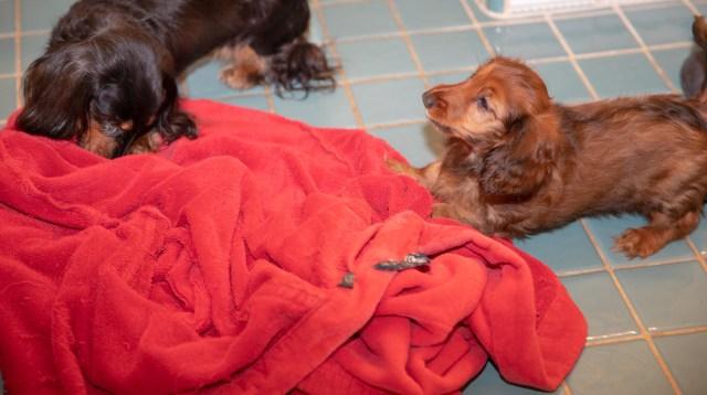 Paris and Aurora on Geoffrey's robe