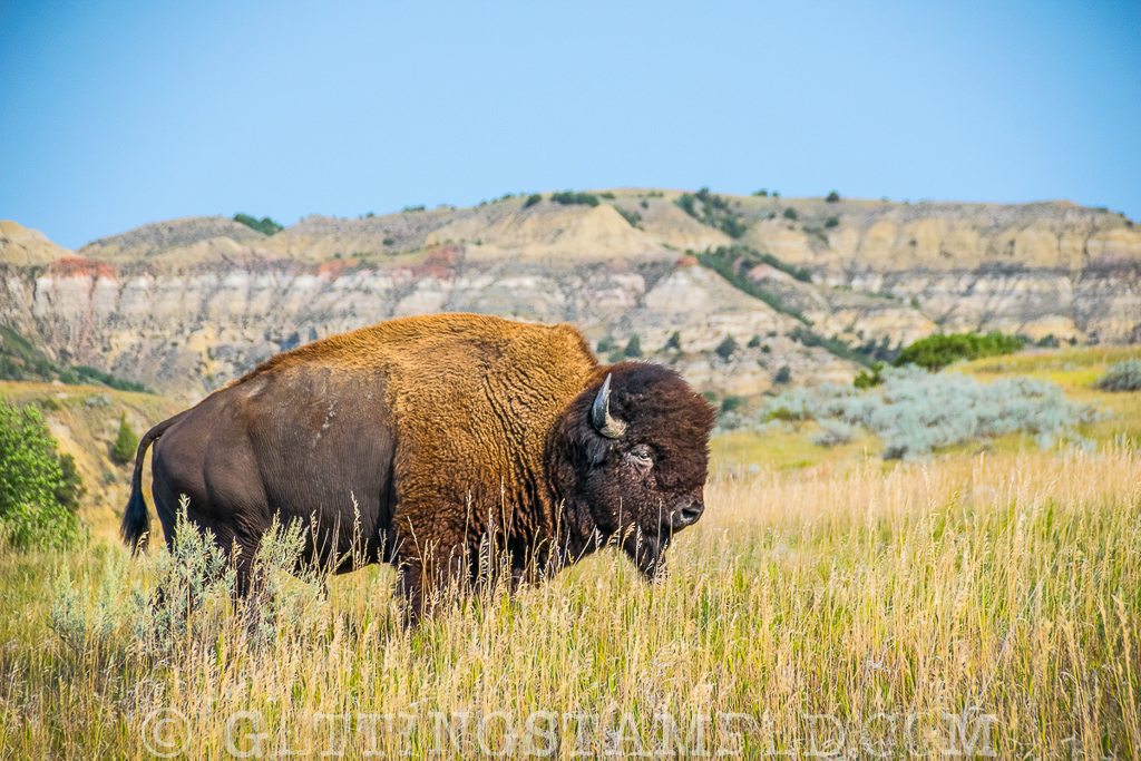 Theodore Roosevelt - National Park Service