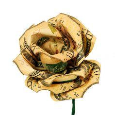 480px-Money-flower[1]