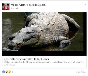 Crocodile-magali