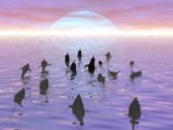 delfini_mare