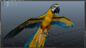 parrot_09