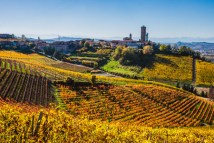70519509 - langhe vineyards in autumn