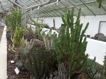cactusoni in serra