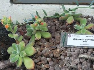 Mini piante grasse: cicciotteria