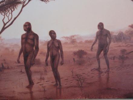 Precedente studi hanno evidenziato solo la presenza di tre individui a piedi che attraversavano quel terreno ricoperto da materiali piroclastici prodotti durante un'eruzione vulcanica, quasi 3,7 milioni di anni fa