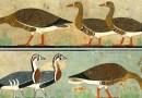 ANIMALI E VOLATILI ESTINTI NELL'ARTE EGIZIANA