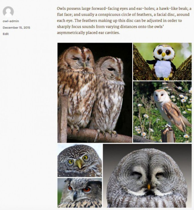 Tiled gallery of owl pictures.