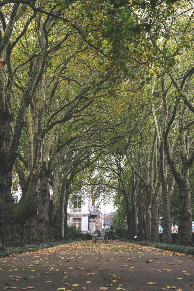 London_Trees