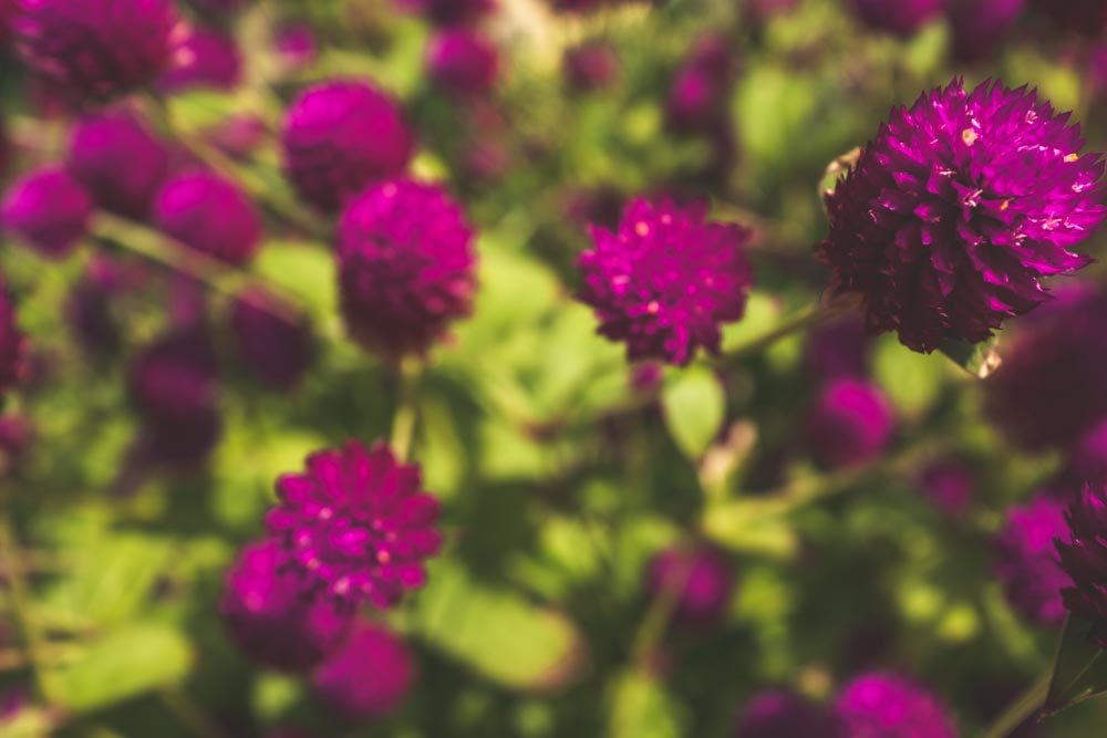 SouthernCroatia_Flowers